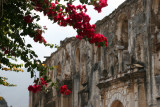 Flor de Bugambilias y Ruinas