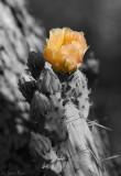 Flower_8112ds.jpg
