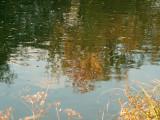 Histoire d'eau -  Reflections