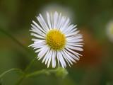 Le temps des fleurs - Flowers