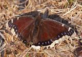 IMG_0053--premier papillon--900.jpg