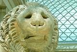 Lion at the British Muesum