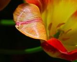 Lovely Petal