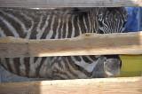 Stripes Through Stripes