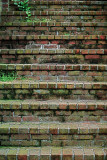 Many Lines in Old Brick Steps
