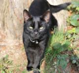 Oscar 06.jpg     A feral cat who domesticated himself