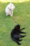 Oscar taking care of Rosie