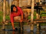 Burmese Maytag