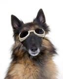 Tyra's Doggles