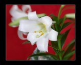 K10D2098_frame.jpg