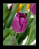 1D9897_frame.jpg
