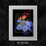 Your Basic Flower.jpg