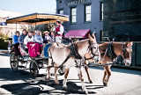 Mule Carriage Tour