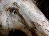 Cypress Eye