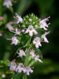 Herbal bloom