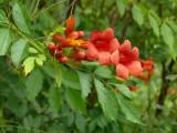 Grandview Blooms