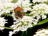 Beetle with makeup