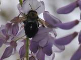 Bee zzzz