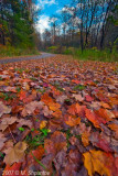 Wide Angle Leaves  - Sunnybrook Park