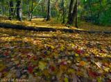 Falliage  - Sunnybrook Park