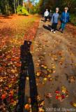 Shadows on Path - Sunnybrook Park
