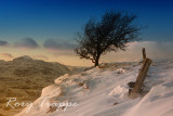 Manod tree