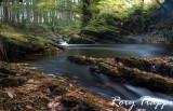 Autumn river.jpg
