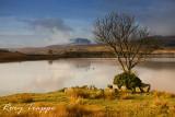 Llyn Trawsfynydd (April 1)