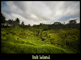 Tegalallang Ricefields