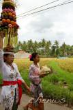 Procession through paddy fields _MG_2130.jpg