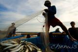 Unloading his catch _CWS7669.jpg