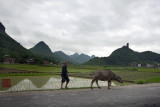 Farmer walking his buffalo on the road between Guilin and Xing Ping.