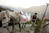 Farmer and horse (China)