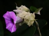 Flower (Feb 06)