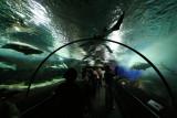 Underwater World, Sentosa (Jun 07)