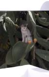 Sherri's cat