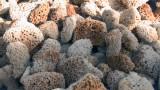 Sponges detai