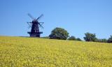 Windmill and oilseed rape