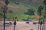 white rhinos in the Wild  Animal Park