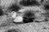 supine secretary bird