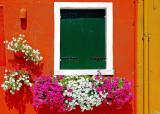 Flowers around the Windows