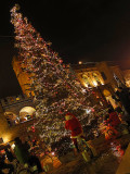 BOLOGNA : Christmas Tree in the Square