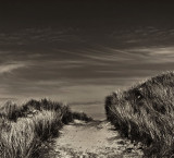pathway .jpg