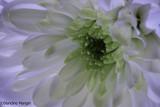 variations autour d'un bouquet