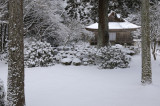 Winter  - Kyoto -