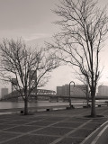 Bare Trees Along the St John's River