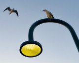 Gull, Heron, and Lamp