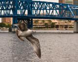 Gull and Mainstreet Bridge