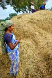 Hay Lady of Panangadi