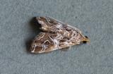 Paracymoriza vagalis